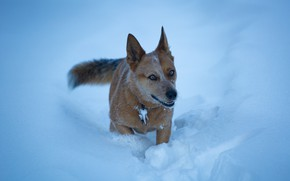 Picture snow, each, dog