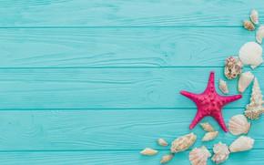 Wallpaper star, shell, blue background