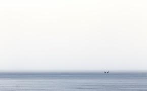 Picture sea, birds, fog