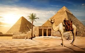 Picture sand, the sky, the sun, Palma, stones, desert, camel, Egypt, pyramid, Cairo