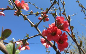 Picture the sky, branches, quince, April, spring 2018, meduzanol ©