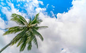 Picture the sky, clouds, nature, Palma, sky, nature, clouds, palm trees