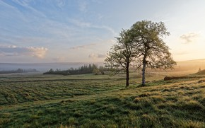 Picture field, tree, morning