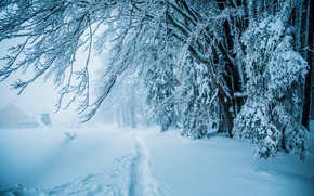 Picture winter, forest, snow, trees, path
