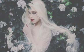 Picture girl, mood, makeup, the bushes, long hair, white hair, flowers