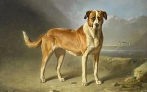 Picture animals, oil, dog, picture, St. Bernard, Bernard Gent