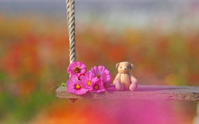 Picture flowers, swing, mood, toy, bear, bokeh, kosmeya, Teddy bear