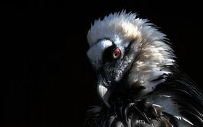Picture bird, feathers, predatory