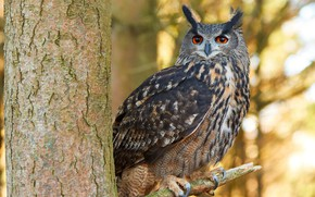 Wallpaper look, nature, background, owl, bird, blur, animals, nature, bokeh, owl, owl, travel, wallpaper., my planet, ...