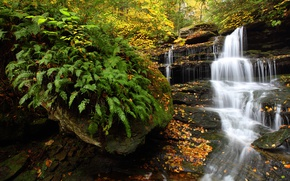 Picture autumn, forest, waterfall, PA, fern, cascade, Pennsylvania, Ricketts Glen State Park