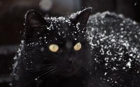 Picture winter, black pictures, snow photos, cat Wallpaper