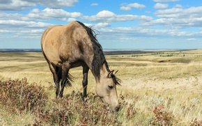 Picture field, nature, horse