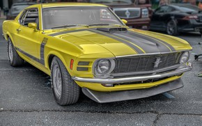Picture Mustang, 302, Boss, FORD