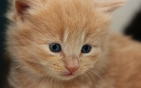 Picture baby, red, kitty