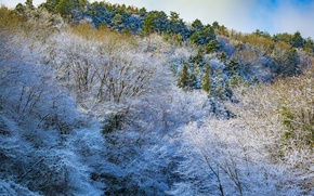 Picture winter, frost, snow, trees, mountains, slope