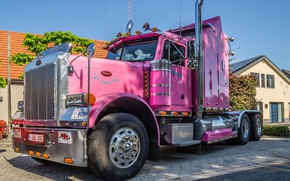 Picture white, tiger, pink, peterbilt