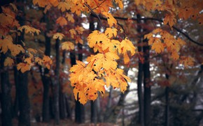 Picture autumn, forest, trees, yellow, nature, foliage