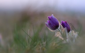 Picture flower, background, spring