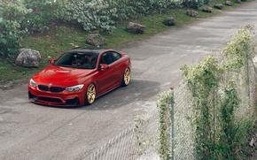 Picture BMW, Orange, Front, Wheels, Velos