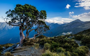 Picture the sky, mountains, tree