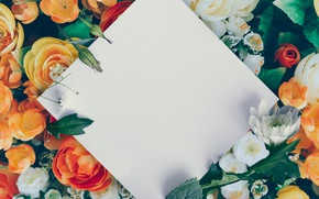 Picture white, Roses, paper