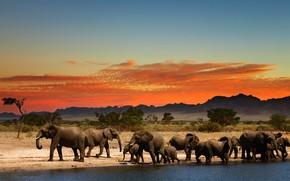 Picture glow, Africa, elephants, drink, the herd