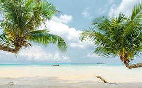 Picture beach, nature, palm trees, Sea, Tropics, blue water