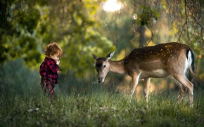 Picture forest, grass, nature, boy, deer, child