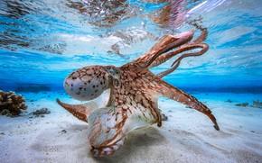 Picture ocean, octopus, sand
