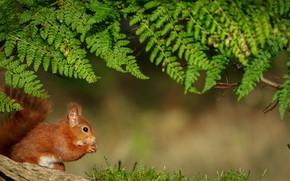 Wallpaper nut, nature, fern, protein, animal
