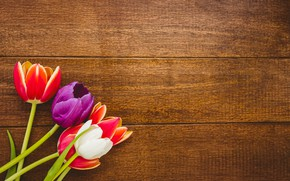 Picture flowers, bouquet, colorful, tulips, red, white, wood, flowers, tulips, spring, purple
