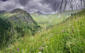 Picture grass, flowers, mountains, meadow