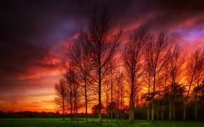 Wallpaper sunset, landscape, trees