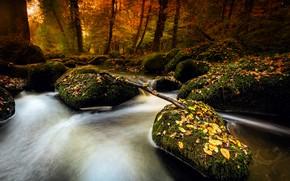 Picture autumn, river, stones, moss, stream