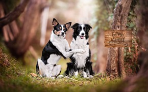 Picture portrait, a couple, two dogs