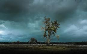 Wallpaper field, twilight, tree