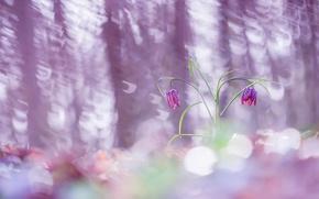 Wallpaper nature, spring, flowers