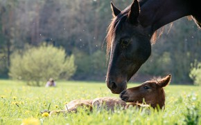 Picture the sun, nature, baby, weed, mom, horses
