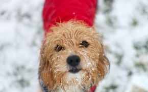 Picture winter, look, snow, each, dog, wool