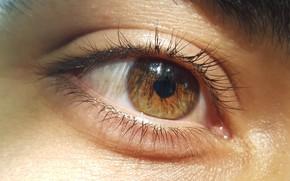 Picture gold, eyes, brown, men, face, eye, soft, faces, nice, Eye