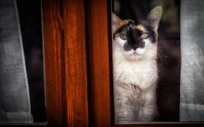 Picture cat, look, window