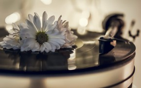 Picture flower, vinyl, record player
