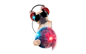 Wallpaper face, music, mood, paw, humor, headphones, glasses, white background, DJ, from the corner, Peeps, French ...