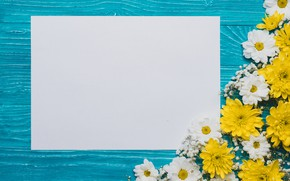 Picture flowers, background, chrysanthemum, flowers, background, a sheet of paper, chrysanthemums