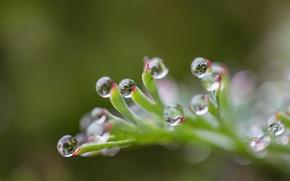 Picture drops, sheet, blur
