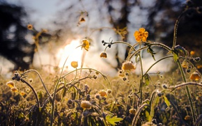 Picture grass, flowers, nature