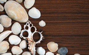 Picture background, Wooden background, Seashells