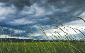 Wallpaper field, the sky, grass, macro, clouds