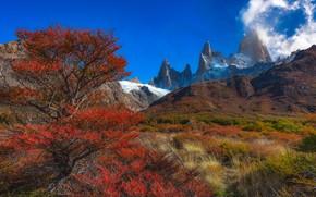 Picture autumn, trees, mountains, top, peak, Argentina, Santa Cruz