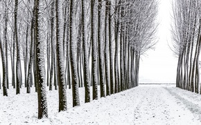 Picture forest, snow, trees